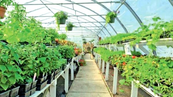 Floriculture export revenue could double with proper assistance-by Indunil Hewage